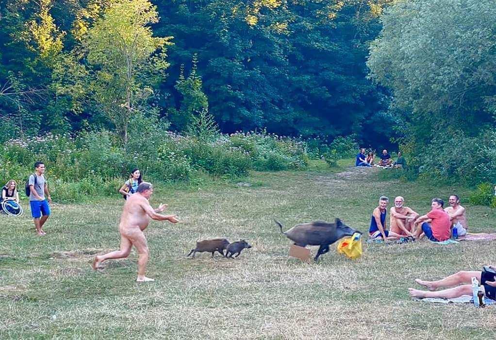Γυμνός άνδρας τρέχει πίσω από «κλέφτες» αγριογούρουνα