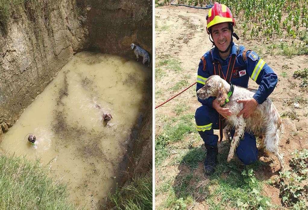 Κομοτηνή: Απεγκλωβίστηκαν σκύλοι από στέρνα