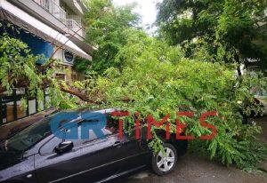 Θεσσαλονίκη: Δέντρο καταπλάκωσε αυτοκίνητο (ΦΩΤΟ-VIDEO)