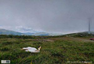 Νεκροί από ανεμογεννήτριες 3 προστατευόμενοι πελεκάνοι