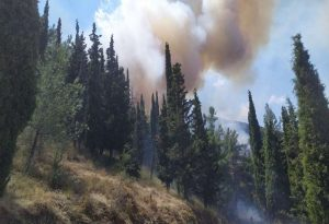 Πυροσβεστική: 48 πυρκαγιές το τελευταίο 24ωρο