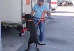 Το «σήμα» της ΕΛΑΣ σε 3 νέους αστυνομικούς σκύλους (ΦΩΤΟ)