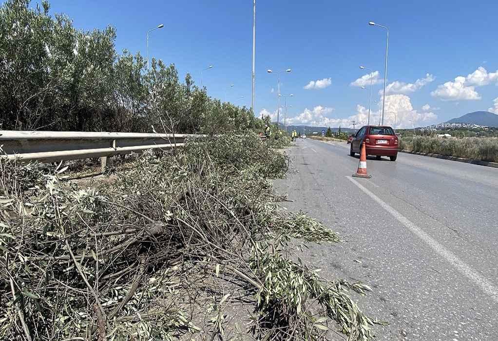 Έργα κοπής πρασίνου στη Μουδανίων και στην Περιφερειακή Οδό την επόμενη εβδομάδα