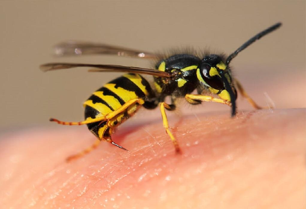 Βόλος: 55χρονος κινδύνευσε να πεθάνει από τσίμπημα μέλισσας
