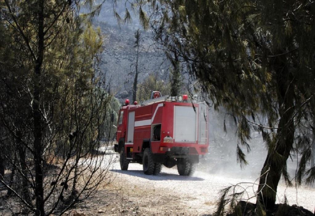 Υπό μερικό έλεγχο η πυρκαγιά στο Άλσος Βεΐκου στο Γαλάτσι