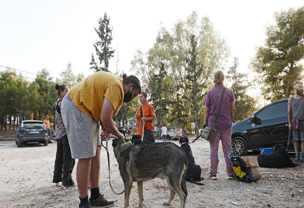 Φωτιά στον Βύρωνα: Απειλήθηκε το καταφύγιο αδέσποτων ζώων