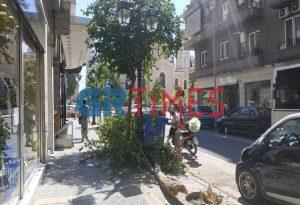 Πτώση δέντρου στη Θεσσαλονίκη λόγω του αέρα (ΦΩΤΟ-VIDEO)