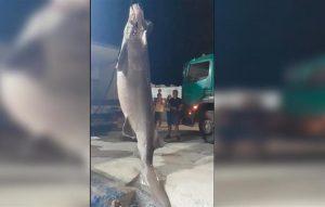 Ψάρεψαν προστατευόμενο είδος καρχαρία στο Άγιον Όρος