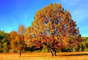 Ξεκινά και επίσημα το φθινόπωρο από την Τρίτη
