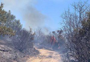 Υπό έλεγχο η φωτιά στον Λαγκαδά Θεσσαλονίκης (ΦΩΤΟ)