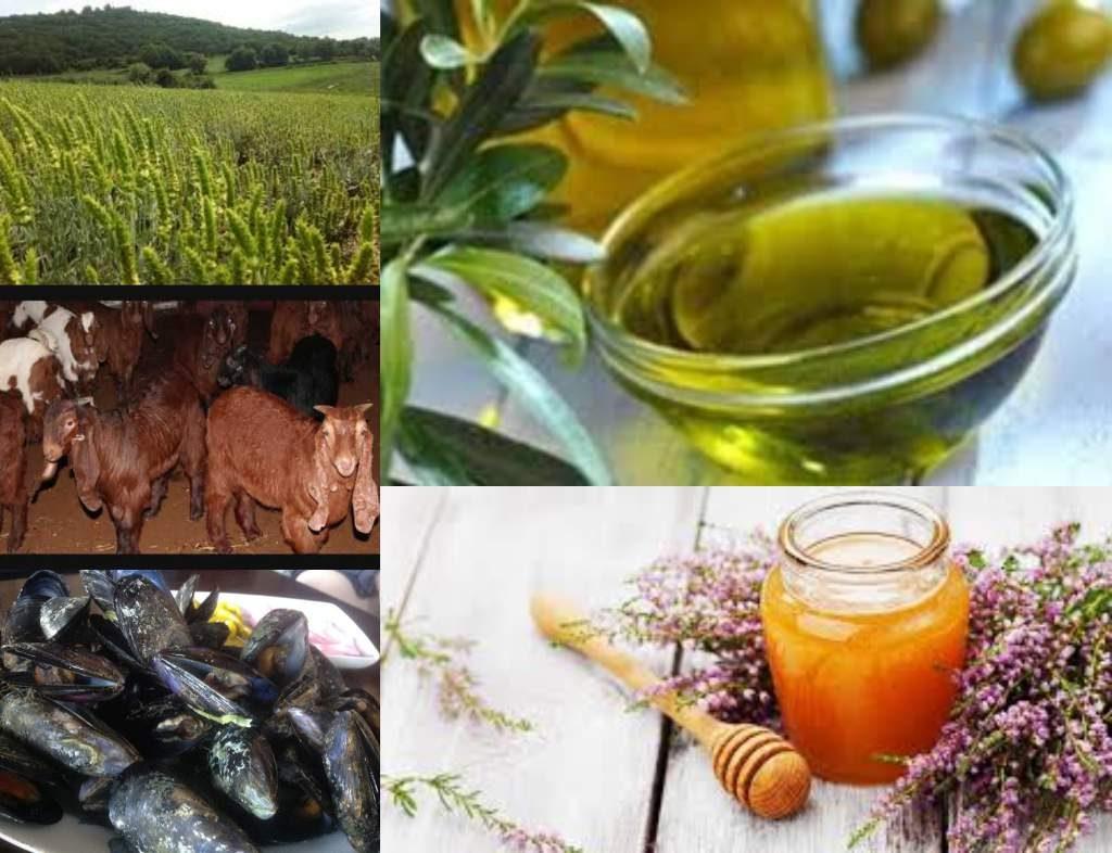 Χαλκιδική: Δυνατές υποψηφιότητες για ΠΟΠ και ΠΓΕ