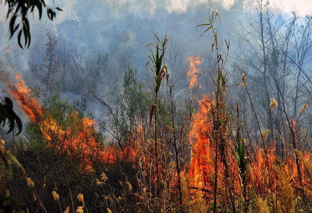 Αργεντινή: Στάχτη έγιναν 65.000 στρέμματα δασικών εκτάσεων