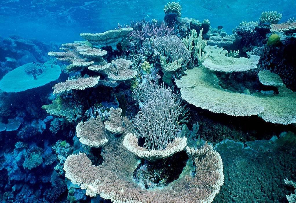 Αυστραλία: Κοραλλιογενής ύφαλος έχασε τα μισά κοράλλια του