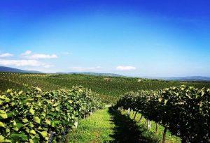 Παρατηρητήριο για προστασία της ΠΓΕ «Μακεδονία» στο κρασί
