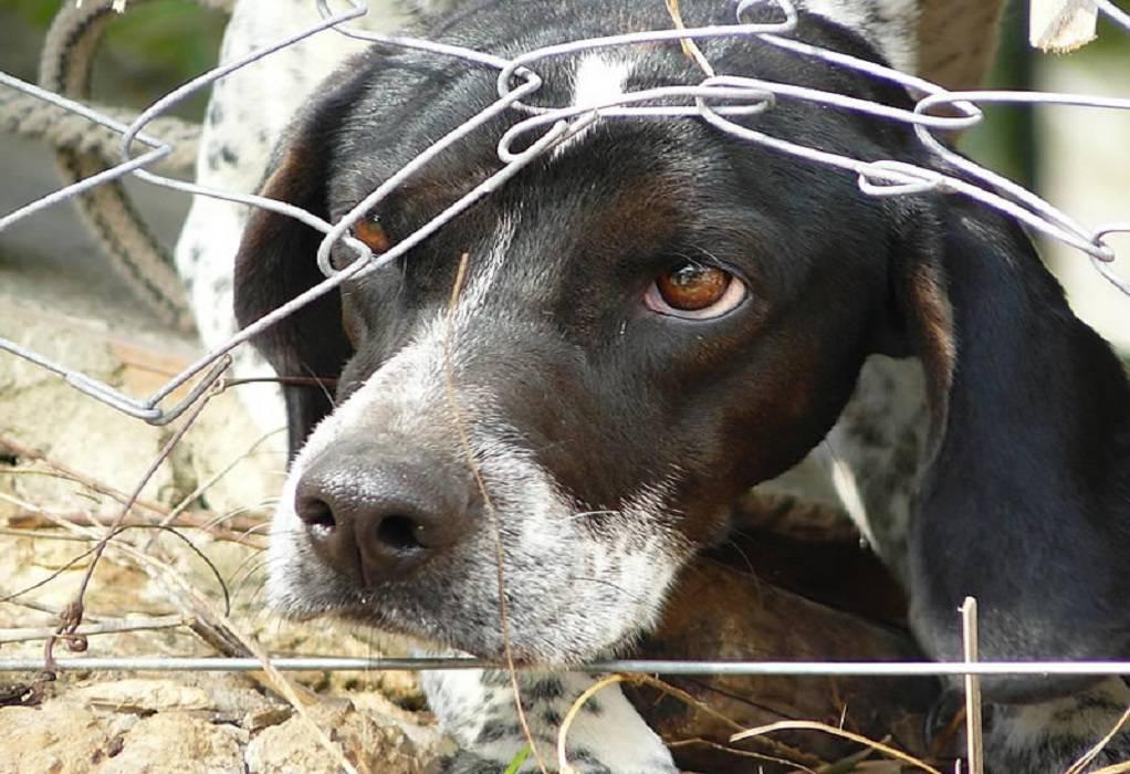 Αρειος Πάγος: Αυτόφωρο και σύλληψη για την κακοποίηση ζώων