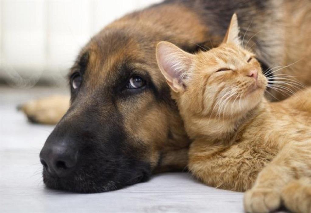 Κορωνοϊός: Εμβολιασμό των κατοικίδιων ζώων προτείνουν επιστήμονες