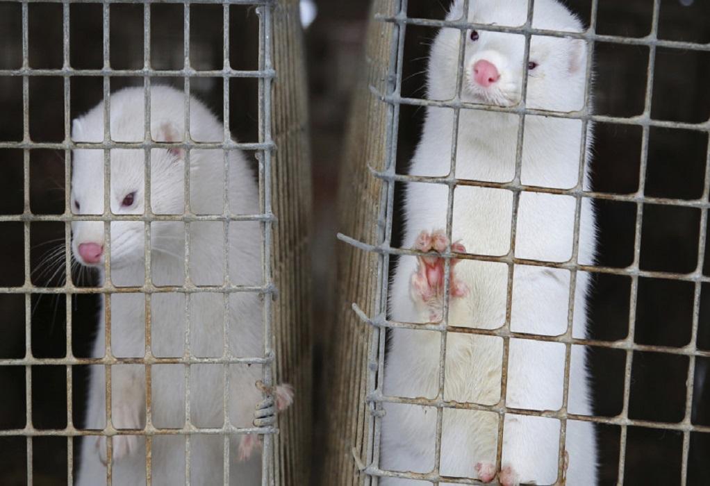 Καστοριά: Δεν προκύπτει μετάλλαξη του κορωνοϊού στα βιζόν