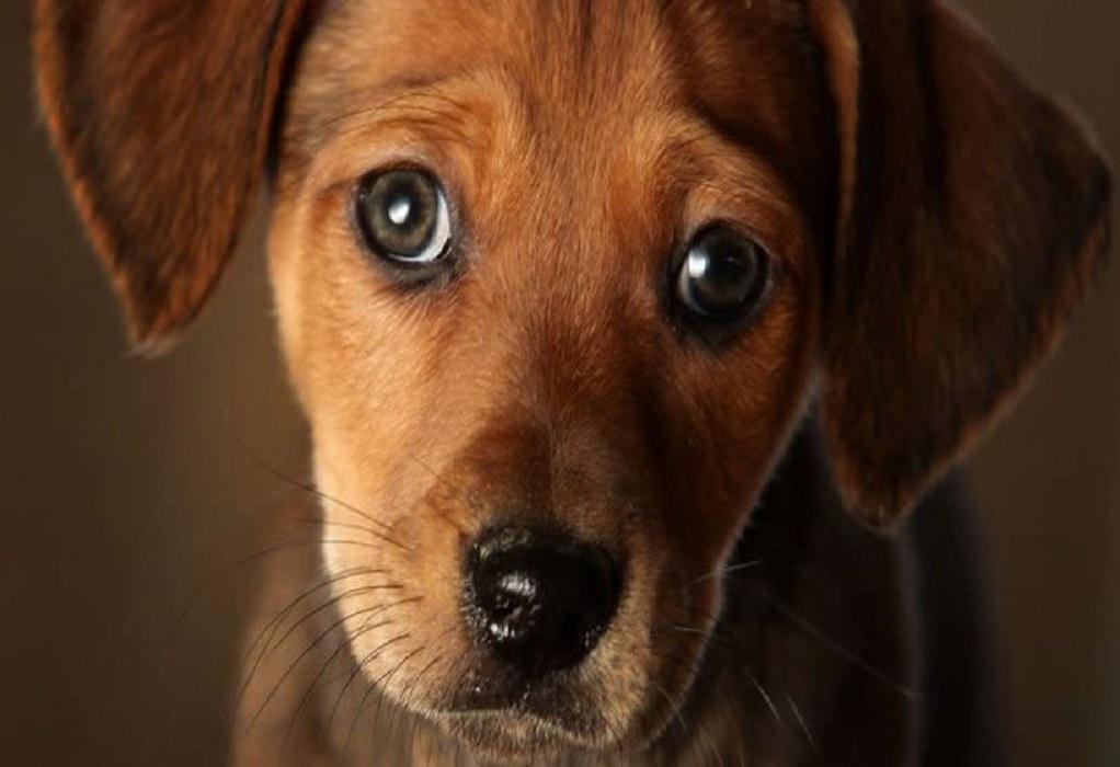 Ολλανδία: Η χώρα που κατάφερε να μην έχει κανένα αδέσποτο σκύλο