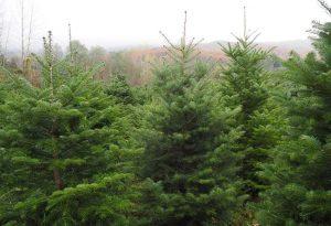 Δήμος Καλαμαριάς: Ανακυκλώνει και φέτος χριστουγεννιάτικα δέντρα