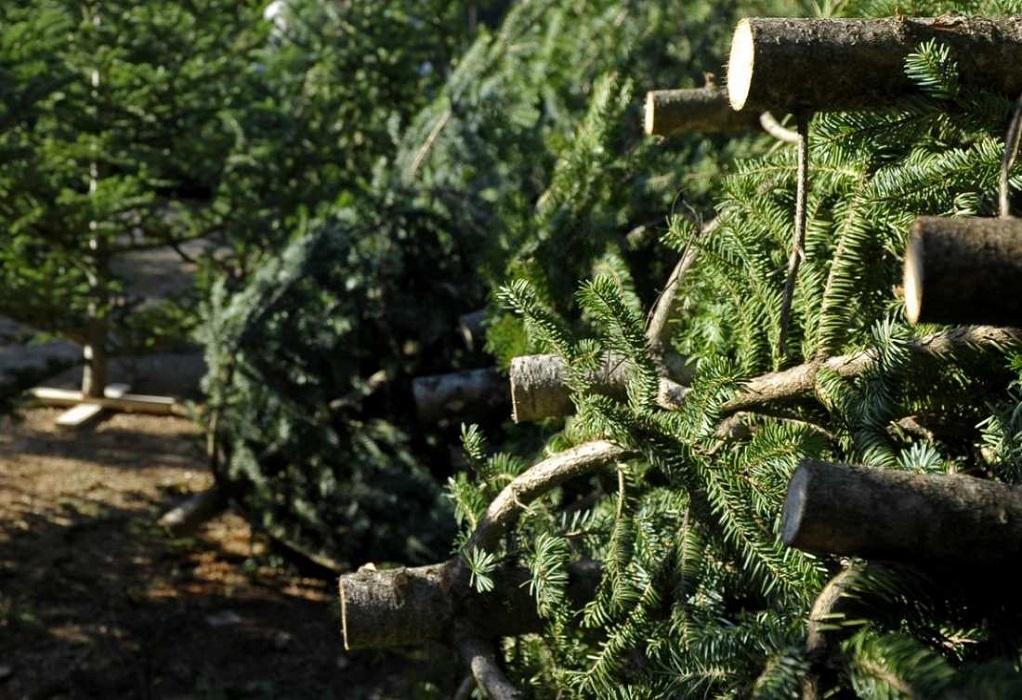 Δ. Θεσσαλονίκης: Σκάφες ανακύκλωσης για… φυσικά δέντρα