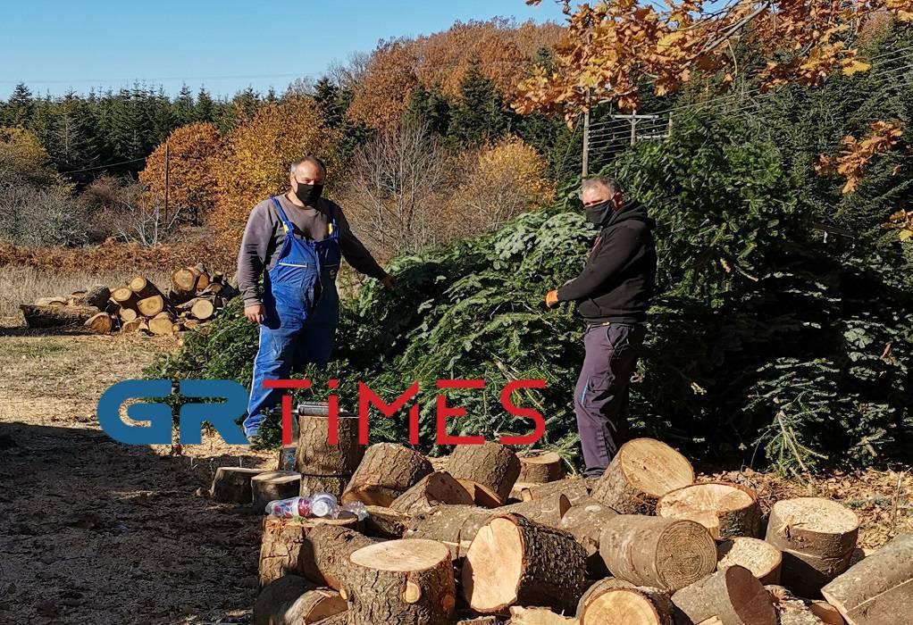 Έλατα Χολομώντα: «Στον αέρα» οι ελατοπαραγωγοί – Δείτε το δέντρο που θα στολιστεί στην Πλατεία Αριστοτέλους