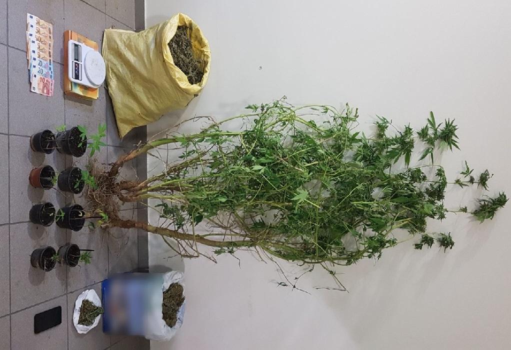 Λέσβος: Βρέθηκε στην κατοχή του δενδρύλλιο κάνναβης 2 μέτρα