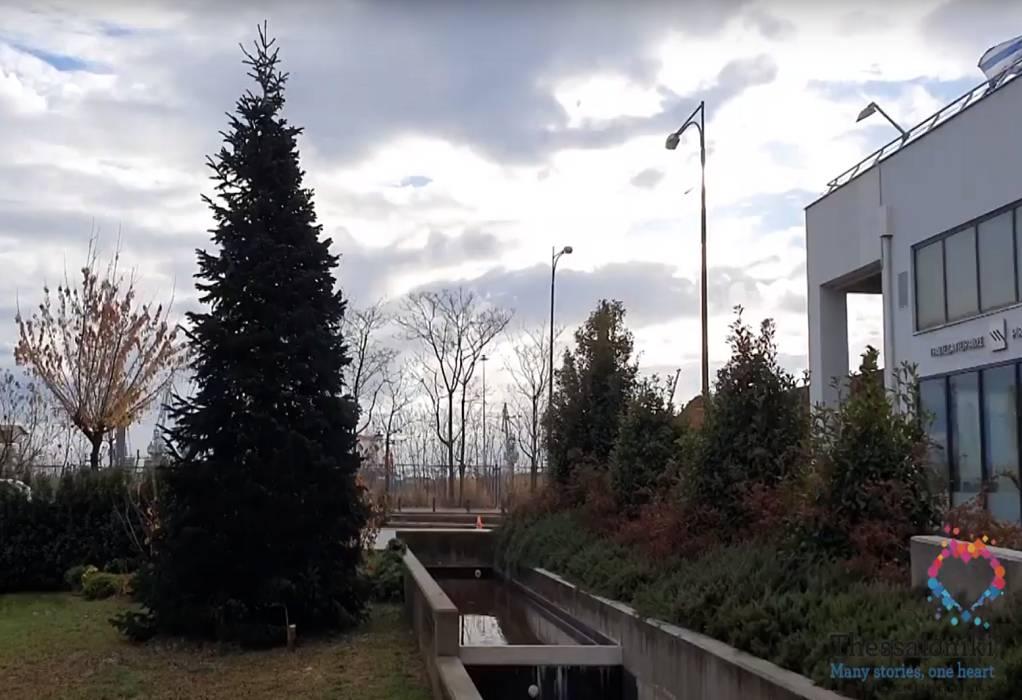 Από την Ιταλία… στην ΠΚΜ δέντρο ύψους 10 μέτρων