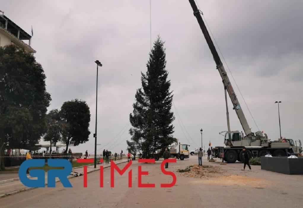 Θεσσαλονίκη: Τοποθετείται το χριστουγεννιάτικο δέντρο στην Αριστοτέλους (ΦΩΤΟ+VIDEO)