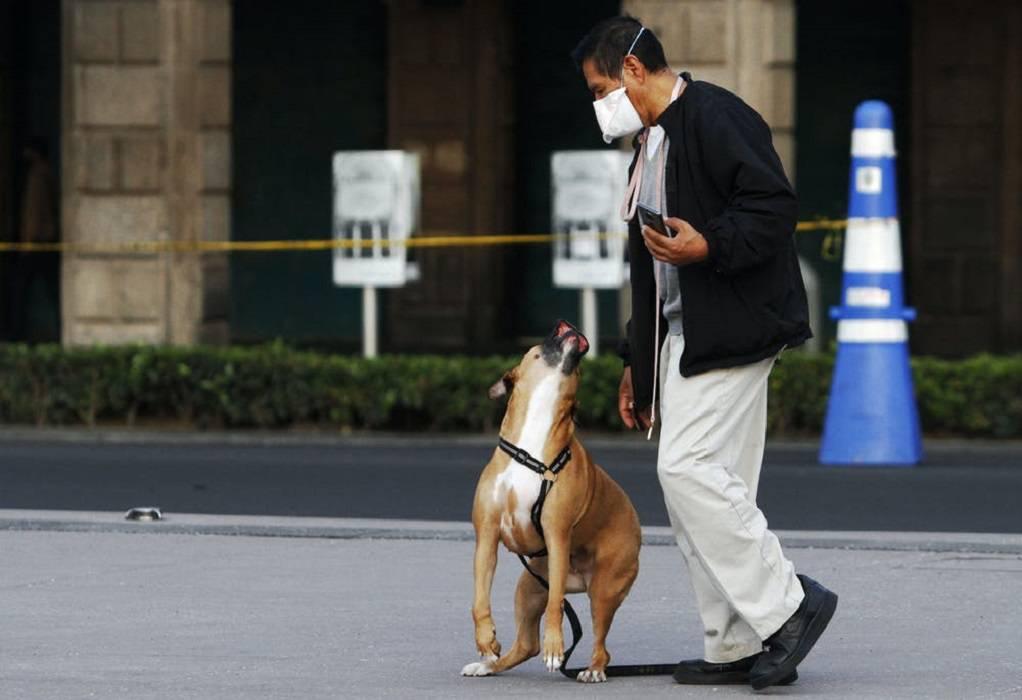 Έρευνα: Σκύλοι και γάτες συχνά κολλάνε κορωνοϊό από τους ιδιοκτήτες τους