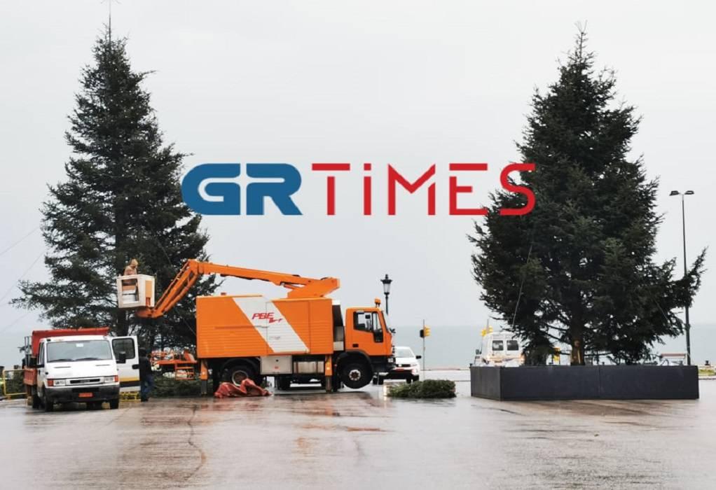 Θεσσαλονίκη: Στολίζονται τα χριστουγεννιάτικα δέντρα στην Αριστοτέλους (ΦΩΤΟ+VIDEO)
