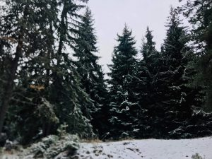Δράμα: Χριστουγεννιάτικα έλατα για τη «Γειτονιά των Αστεριών» (ΦΩΤΟ)