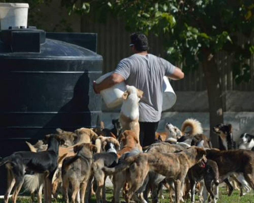 Τι αλλάζει με το ν/σ για ζώα συντροφιάς και αδέσποτα