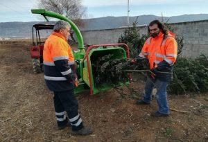 Δ. Παύλου Μελά: Ανακύκλωση φυσικών δέντρων