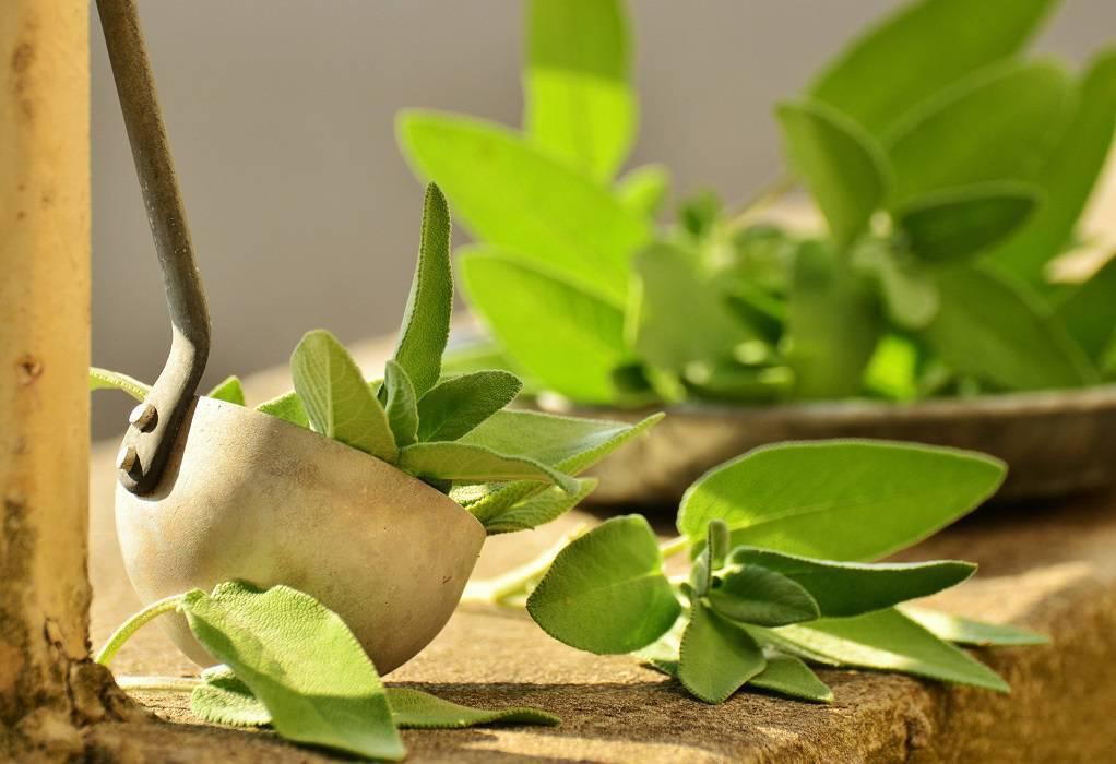 Διατροφή: Βότανα που προστατεύουν από ιώσεις