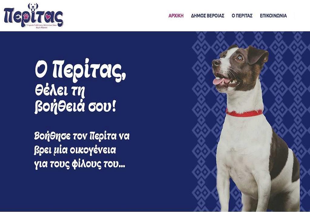 Δήμος Βέροιας: Υιοθεσία σκύλων συντροφιάς μέσω διαδικτύου