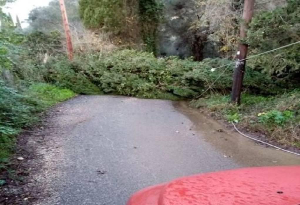 Κέρκυρα: Πτώσεις δέντρων λόγω κακοκαιρίας