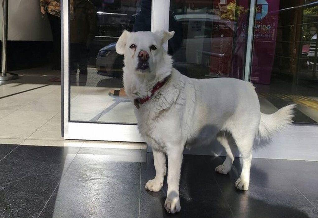 Σκύλος περίμενε επί μέρες τον ιδιοκτήτη του έξω από νοσοκομείο (VIDEO)