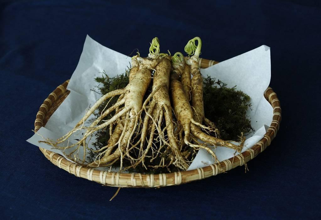 Ginseng: Ποια οφέλη προσφέρει η κατανάλωσή του στην υγεία;