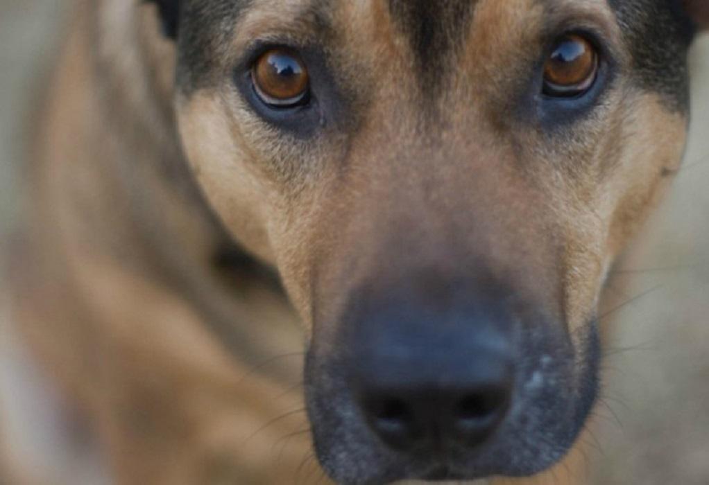 Mαζική δηλητηρίαση σκύλων στο Ηράκλειο