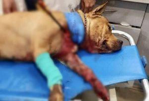 Πετρούπολη: Βίντεο ντοκουμέντο από τη φονική επίθεση με τόξο στον σκύλο