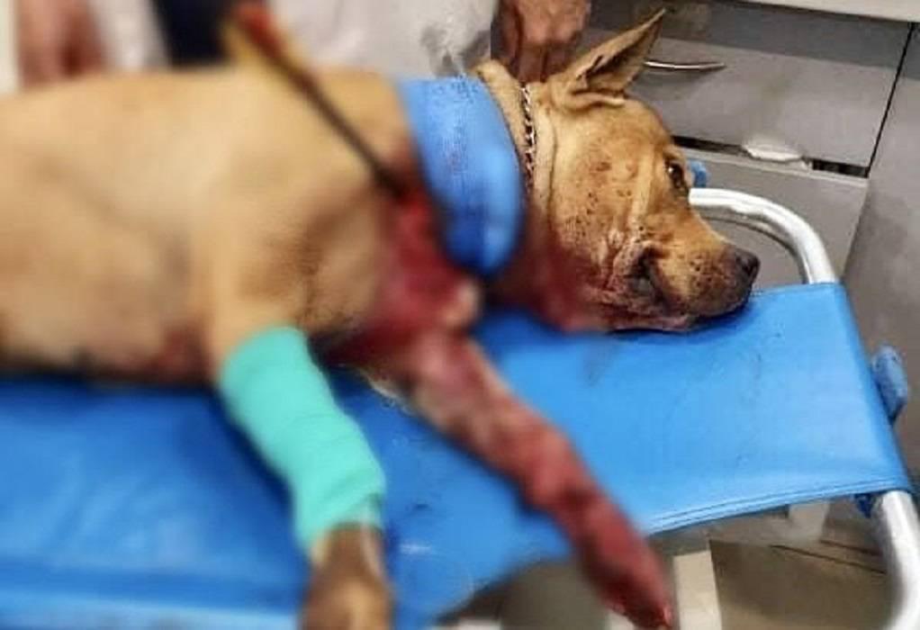 Θεσσαλονίκη: 25xρονος μαχαίρωσε και σκότωσε σκύλο (VIDEO)