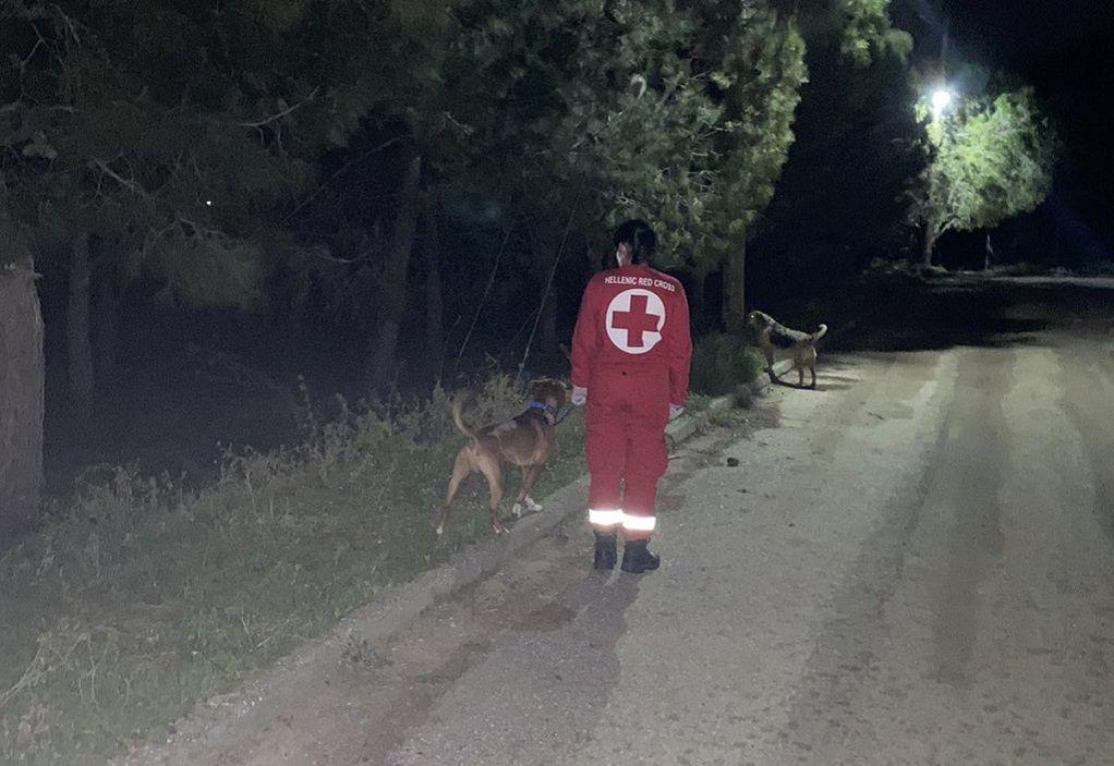 «Υπηρεσία περιπάτου για Ζώα Συντροφιάς» από τον Ελληνικό Ερυθρό Σταυρό