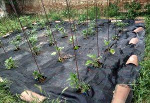 Μηδενικά Απορρίμματα – Αγρότισσες: Καλύτερη υγεία, μείωση απορριμμάτων και οικονομία