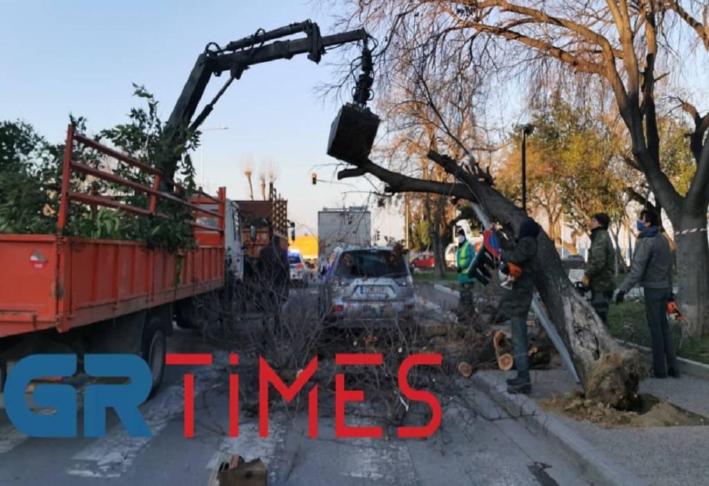 Θεσσαλονίκη: Δέντρο έπεσε σε φανάρι (ΦΩΤΟ+VIDEO)