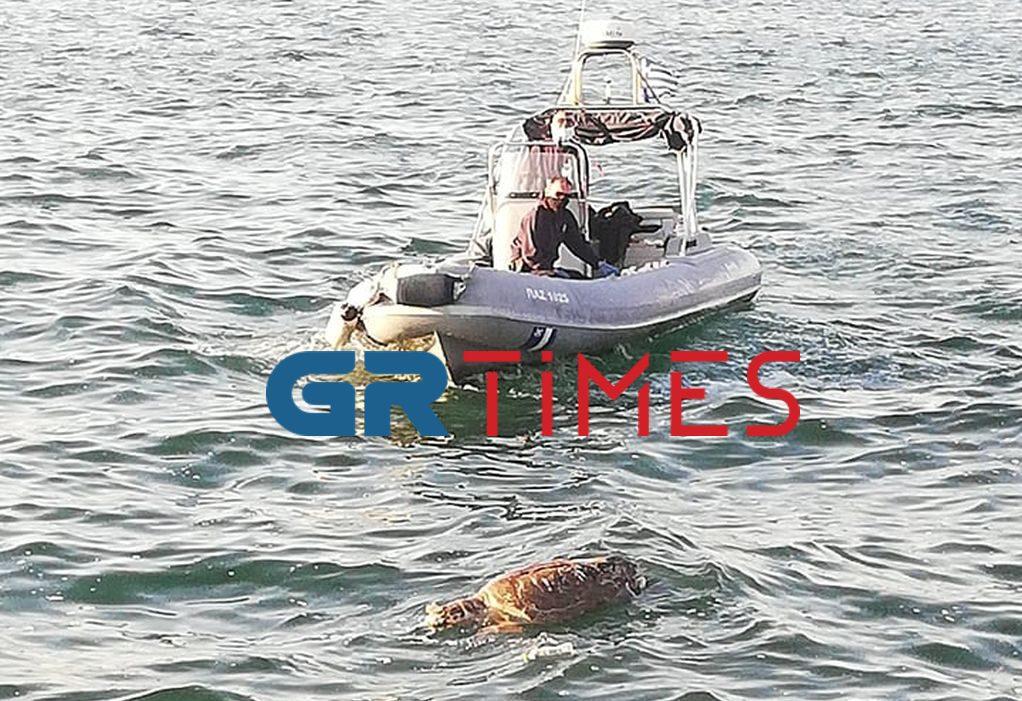Πτώμα χελώνας επέπλεε στα νερά του Θερμαϊκού (ΦΩΤΟ/VIDEO)