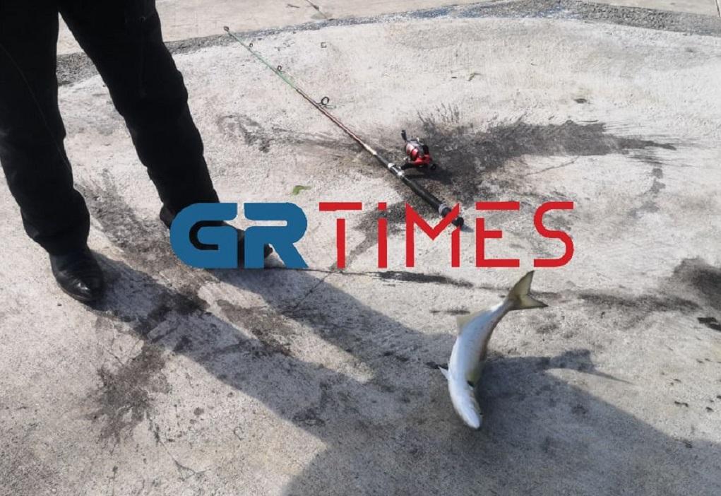 Θεσσαλονίκη: Ψαράς έβγαλε γοφάρι πάνω από κιλό (VIDEO)