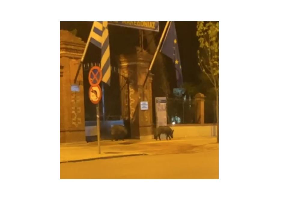 Αγριογούρουνα βόλταραν απόψε στην Ανατολική Θεσσαλονίκη (ΦΩΤΟ)