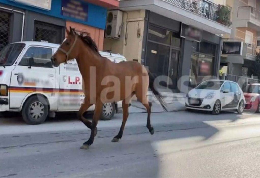 Άλογο έκανε «βόλτες» σε κεντρικούς δρόμους της Λάρισας! (VIDEO)