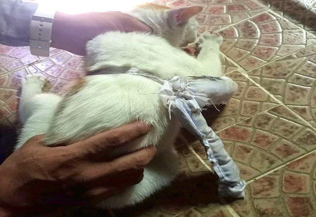 """Παναμάς: """"Συνελήφθη"""" γάτος-βαποράκι έξω από φυλακή"""