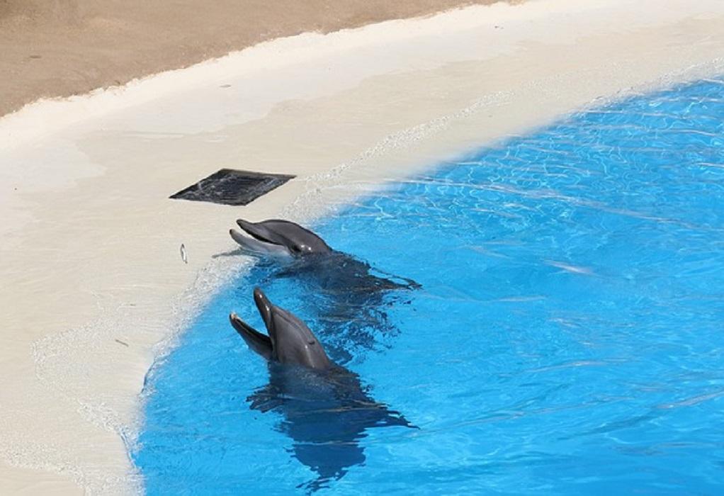 Μήνυση για παραστάσεις δελφινιών στο Αττικό Ζωολογικό Πάρκο